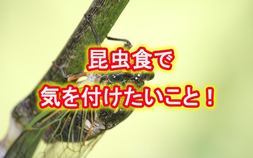 人気もウナギ登り、定着してきた昆虫食で気をつけたいポイント